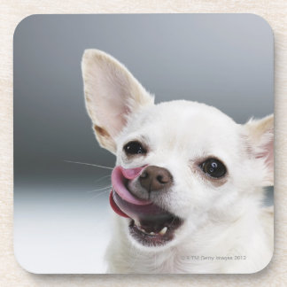 White Chihuahua licking lips Drink Coaster