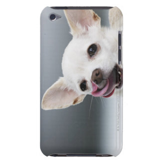 White Chihuahua licking lips iPod Touch Case-Mate Case