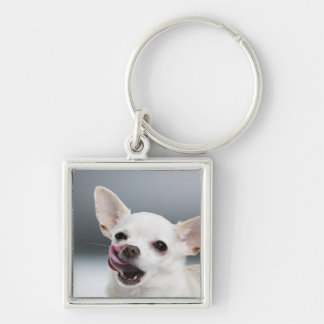 White Chihuahua licking lips Key Ring