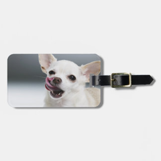 White Chihuahua licking lips Luggage Tag