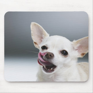 White Chihuahua licking lips Mouse Pad