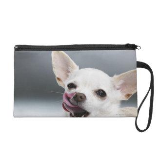 White Chihuahua licking lips Wristlet