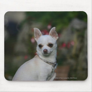 White Chihuahua Mouse Mat