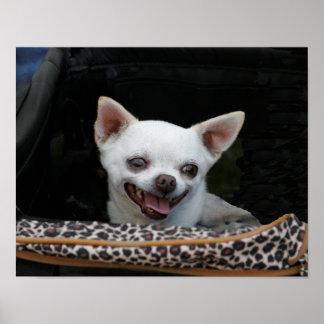 White Chihuahua Print