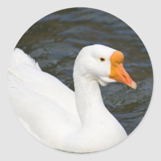White Chinese Goose Classic Round Sticker