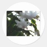white christmas cactus classic round sticker