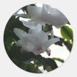 white christmas cactus stickers
