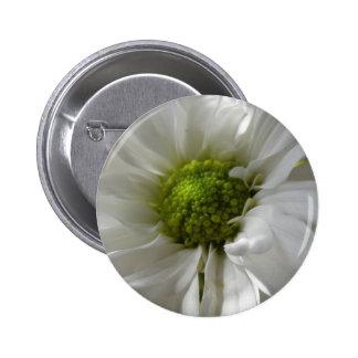 White Chrysanthemum Button