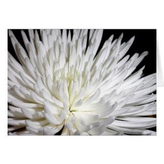 White Chrysanthemum Flower Mums Flowers Photo Card