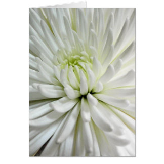 White Chrysanthemum Flower Mums Flowers Photo Card