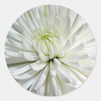 White Chrysanthemum Flower Mums Flowers Photo Round Sticker
