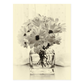 White Chrysanthemums Postcard