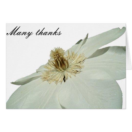 white clemetis thank you card