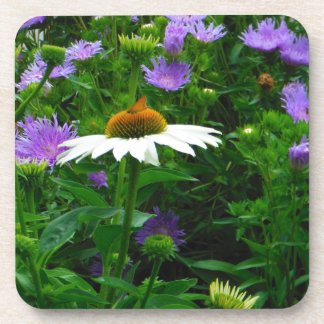 White Cone flower purple flowers and moth Beverage Coaster