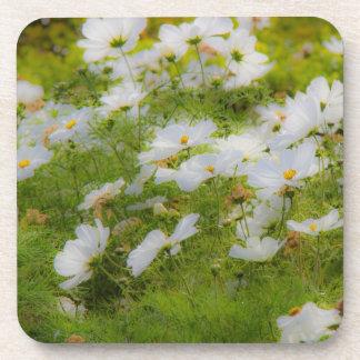 White Cosmos Flowers Cork Coasters