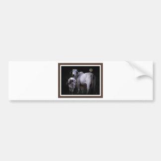 White Cow and Calf Bumper Sticker