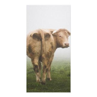 White Cow Bull looking Back in a Foggy Field Custom Photo Card