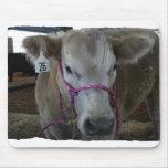 White Cow Head Shot at County Fair Mousepads