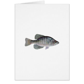 White Crappie Greeting Cards