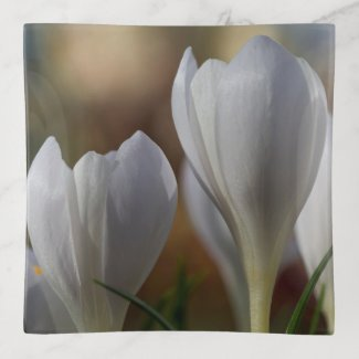 White Crocuses Floral Trinket Tray