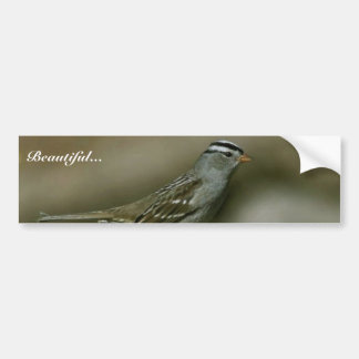 White-crowned sparrow car bumper sticker