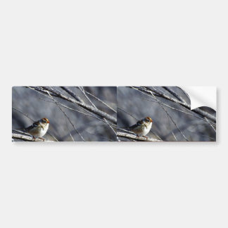 White-crowned sparrow female bumper sticker