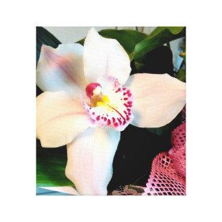 White Cymbidium Orchid Canvas Print