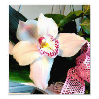 White Cymbidium Orchid Photo Print