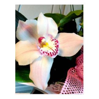White Cymbidium Orchid Postcard