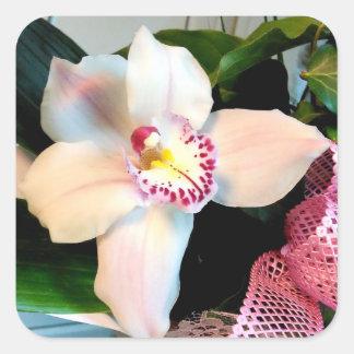 White Cymbidium Orchid Square Sticker