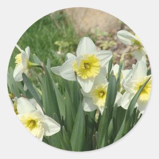 White Daffodils Classic Round Sticker