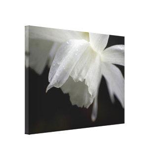 White Daffodils Floral Photo Print