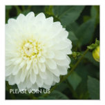 White Dahlia 13 Cm X 13 Cm Square Invitation Card