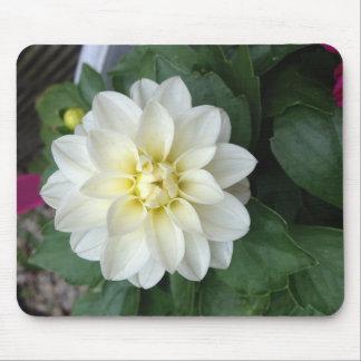 White Dahlia Mouse Pad