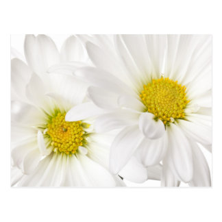 White Daisies - Customized Daisy Flower Template Postcard