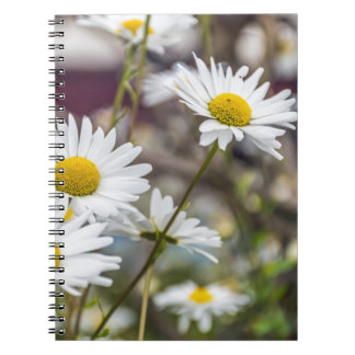 White daisies notebook
