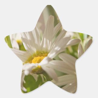 White Daisies Star Sticker