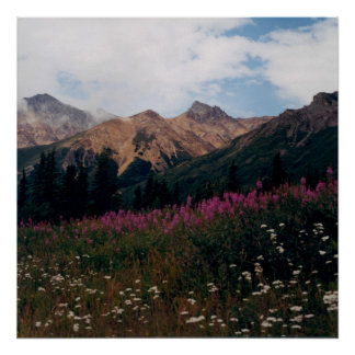 White Daisy and Purple Fireweed Mountains Photo Poster