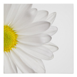 White Daisy Flower Background Customized Daisies Poster
