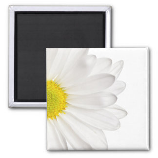 White Daisy Flower Background Customized Daisies Square Magnet