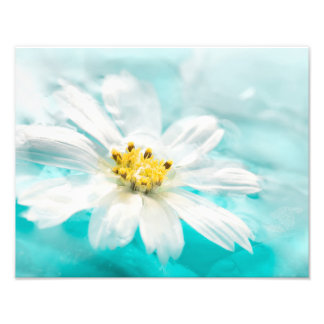 White Daisy Flower Blue Water Pond Tropical Photo Art