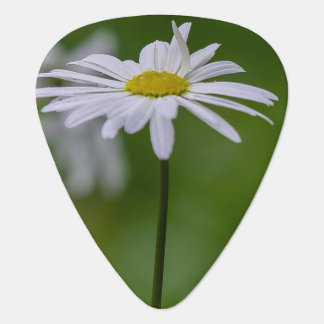 White Daisy Flower on Green Background Plectrum