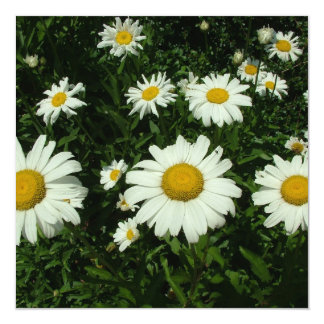 white daisy flowers happy birthday 13 cm x 13 cm square invitation card