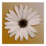 White Daisy Posters