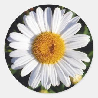 white daisy round sticker