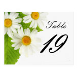 white daisy table number postcard