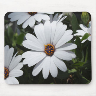 White Daisy's in Bloom Mouse Mat