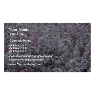 white Dame's rocket flowers Business Card