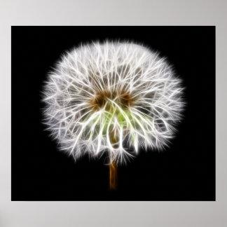 White Dandelion Flower Plant Poster