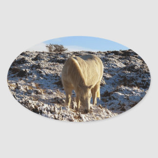 White dartmoor pony grazeing in snow sticker